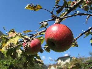 Apple Picking in Hudson Valley